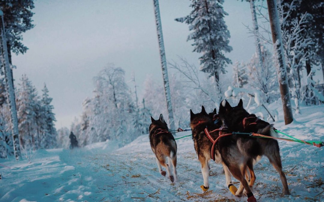 Huskies and Snowmobiles Galore!